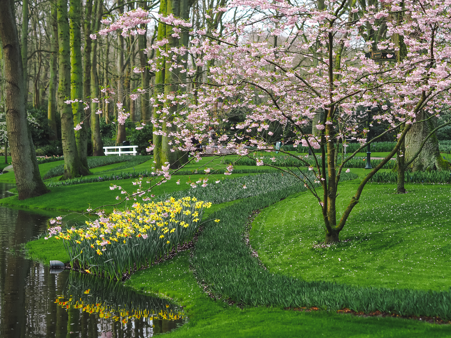 Visiting The Most Beautiful Garden in Europe Keukenhof