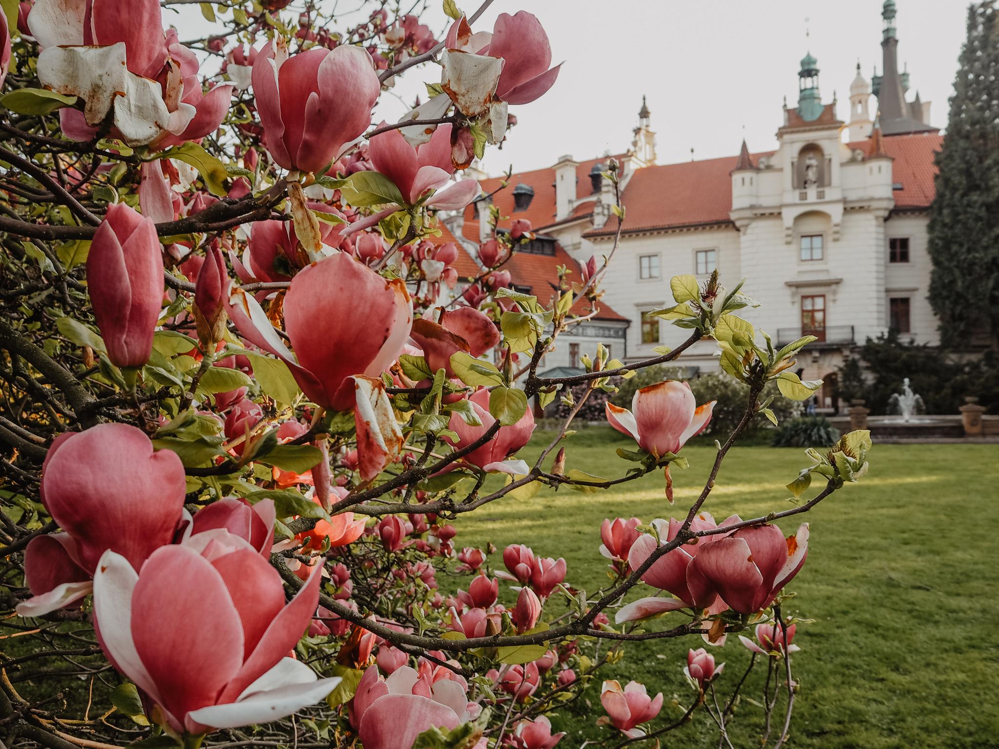 Pruhonice Prague Spring