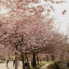 Things to do in Prague in Spring