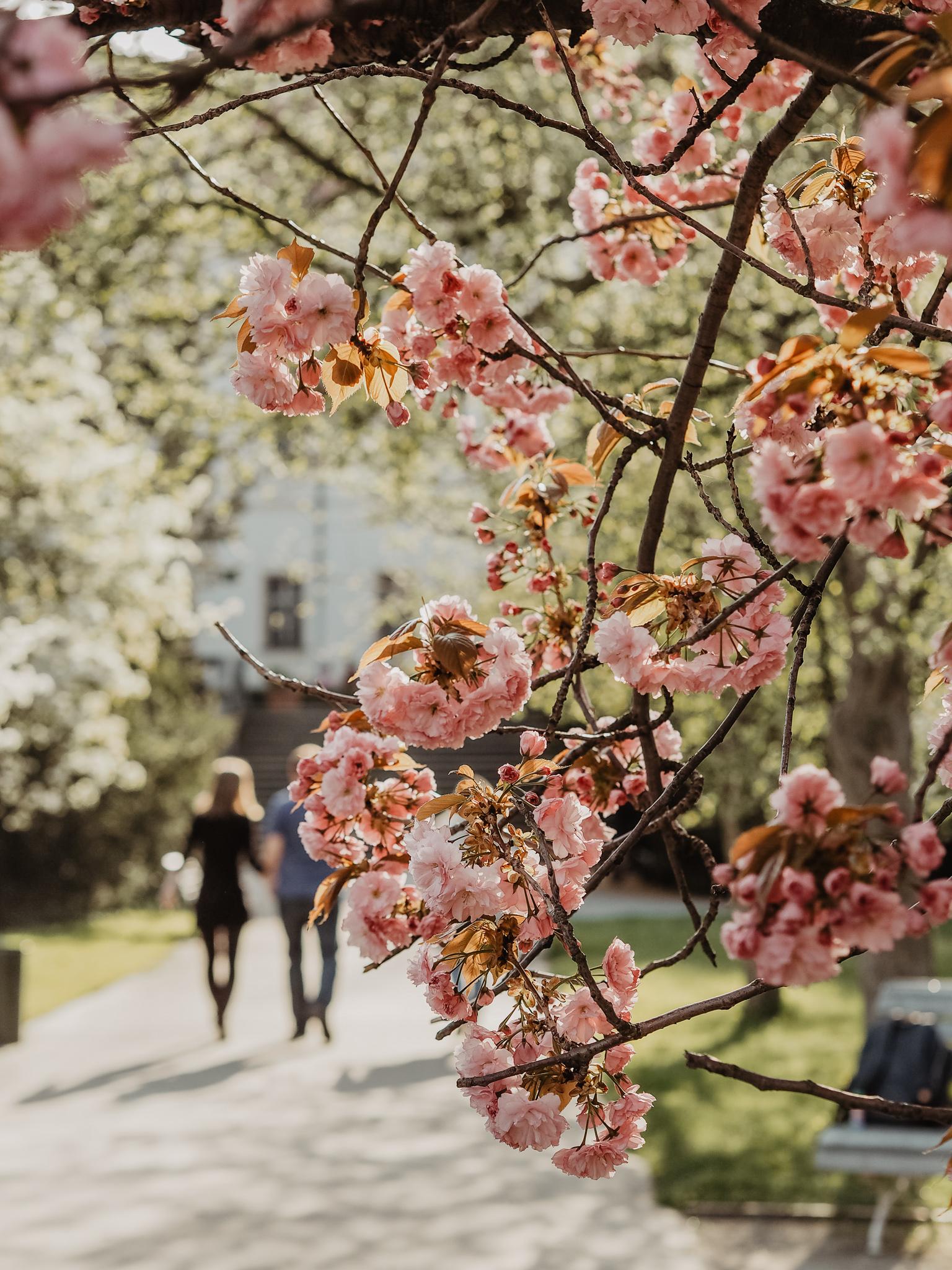 Vojanovy sady Prague Spring